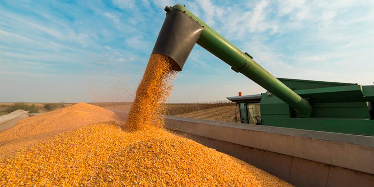 Valor da produção agrícola bate recorde. (Foto: Divulgação)