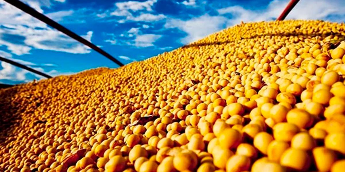 Polêmica sobre o plantio de soja fora de época. (Foto: Divulgação / Mapa)