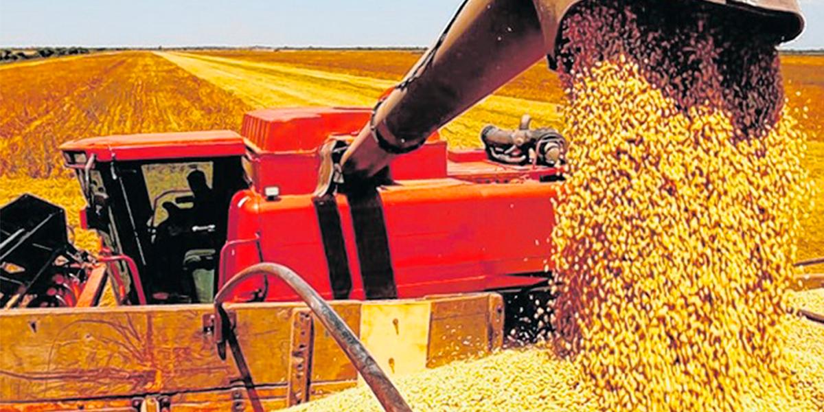 Nos próximos 10 anos a produção de soja em Mato Grosso pode crescer até 66%. (Foto: Divulgação)