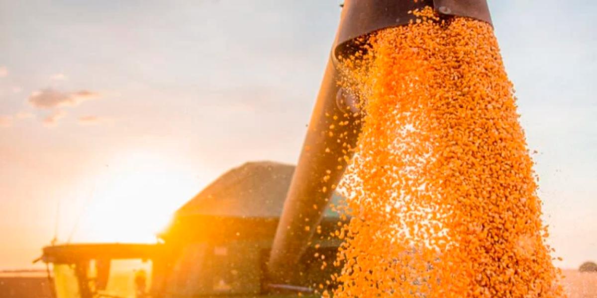 Atraso no plantio de milho para 2021 em Mato Grosso. (Foto: Divulgação / Aiba)