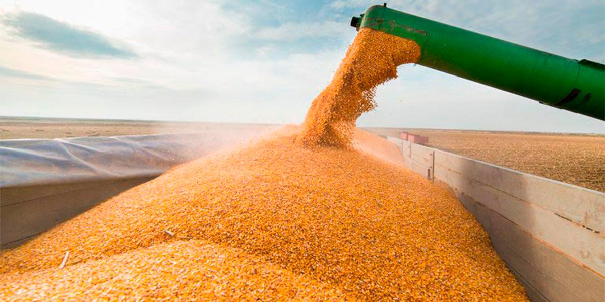 Mato Grosso, líder em produção de grãos no Brasil. (Foto: Divulgação)