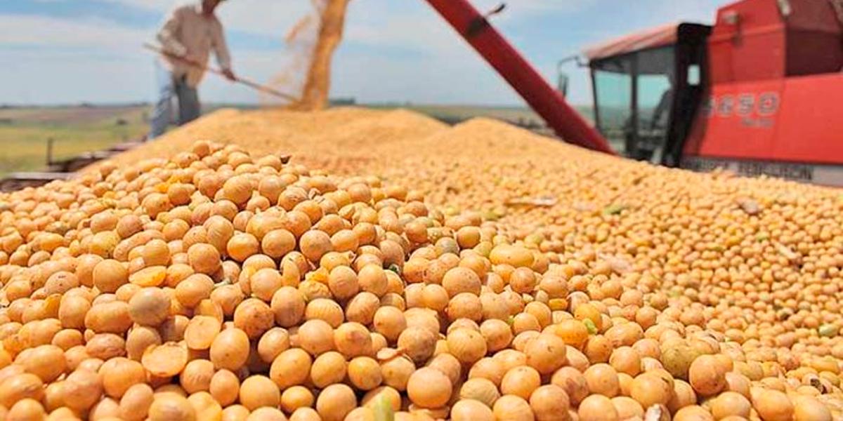 Crescimento no plantio de soja em Mato Grosso. (Foto: Abiove / Divulgação)